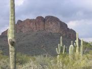 Arizona 039!