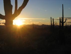 Arizona 302!