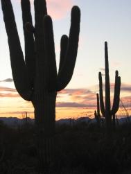 Arizona 349