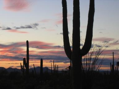 Arizona 367