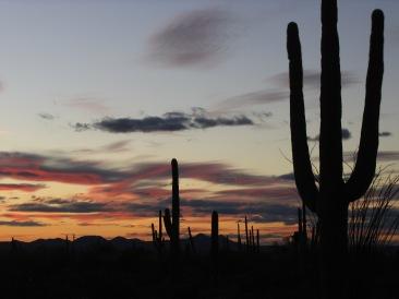 Arizona 375