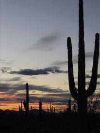 Arizona 381!