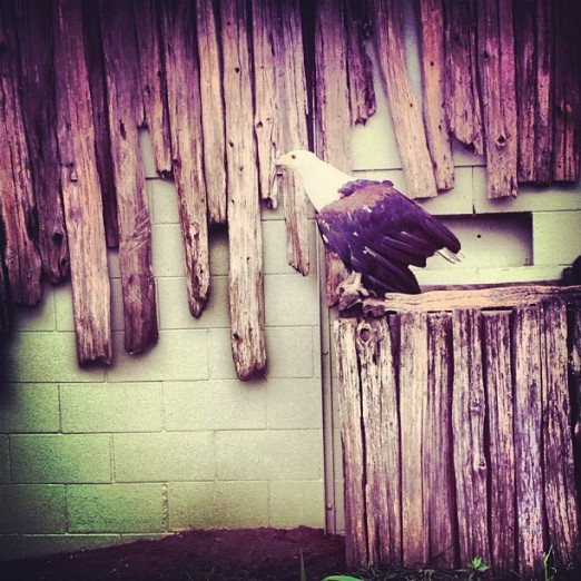Bird - Instagram