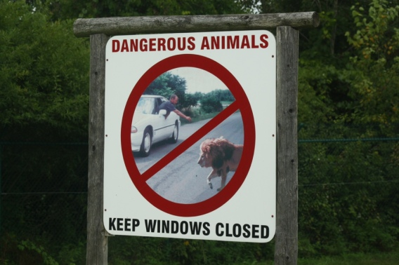 Dangerous animals...