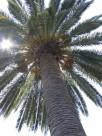 california 010