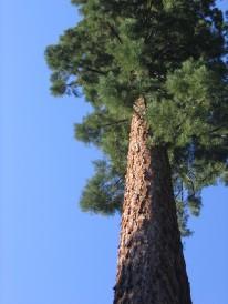 california 139