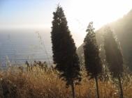 california 275