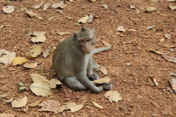 *Angkor-10.10.37