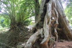 *Angkor-11.47.18