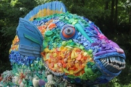 priscilla-the-parrot-fish-1